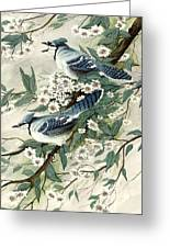 Blue Jays And Blossoms Greeting Card