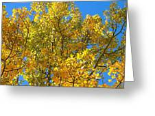 Blue Skies And Golden Aspen Trees Greeting Card