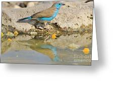 Blue Waxbill Reflection Greeting Card