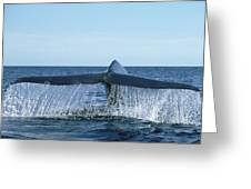 Blue Whale Tail Sea Of Cortez Greeting Card