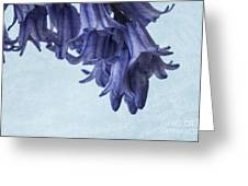 Bluebells 3 Greeting Card