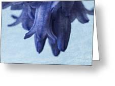 Bluebells 4 Greeting Card