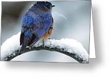 Bluebird In Snowstorm Greeting Card