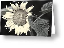 Blumen Greeting Card