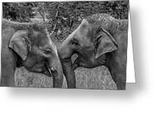 Blushing Elephants Greeting Card