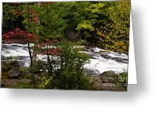 Bog River Greeting Card