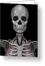 Bones Of The Head Greeting Card