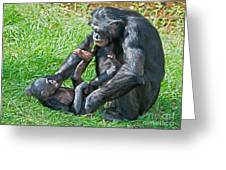 Bonobo Adult And Baby Greeting Card
