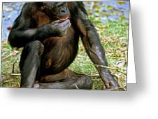 Bonobo Greeting Card