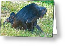 Bonobo Mother And Baby Greeting Card