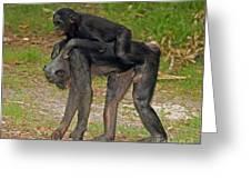 Bonobos Greeting Card