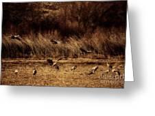Bosque Del Apache New Mexico-sand Cranes V2 Greeting Card