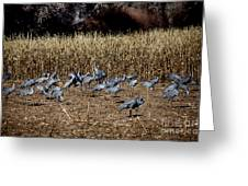Bosque Del Apache New Mexico-sand Cranes V3 Greeting Card