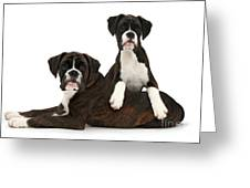 Boxer Pups Greeting Card by Mark Taylor