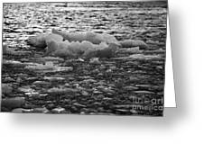 brash sea ice forming on the edge of open water winter closing in Antarctica Greeting Card