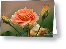 Brass Band Roses Greeting Card