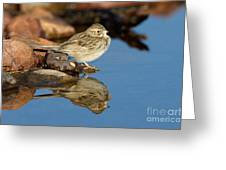 Brewers Sparrow At Waterhole Greeting Card