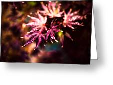 Bright Leaves Greeting Card