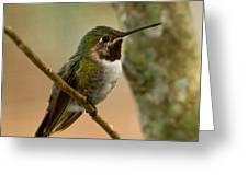 Broad Tailed Hummingbird Greeting Card