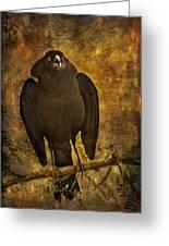 Bronzed Cowbird Greeting Card