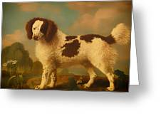 Brown And White Norfolk Or Water Spaniel Greeting Card