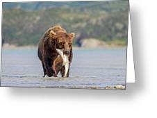 Brown Bear With Salmon Greeting Card