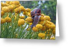 Brown Garden Snail Greeting Card by Walter Klockers