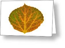 Brown Green Orange And Yellow Aspen Leaf 1 Greeting Card