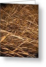 Brown Reeds Greeting Card