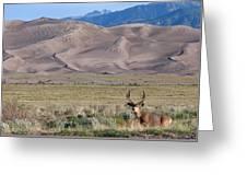 Buck At Great Sand Dunes Greeting Card