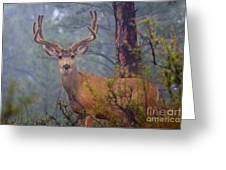 Buck Deer In A Mystical Foggy Forest Scene Greeting Card