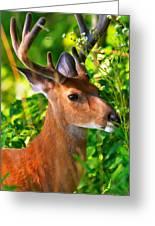 Buck In Velvet Greeting Card