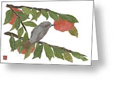 Bulbul And Persimmon  Greeting Card