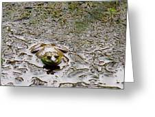 Bullfrog In The Mud Greeting Card
