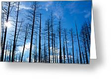 Burnt Pine Trees In A Forest, Grand Greeting Card
