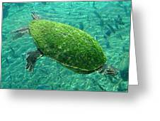 Busch Turtle  Greeting Card