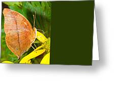 Butterfly Mimicry Greeting Card