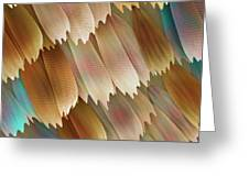 Butterfly Wing Scales Greeting Card