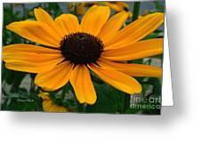 Butterscotch Daisy Greeting Card