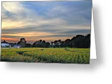 Buttonwood Farm Greeting Card by Andrea Galiffi
