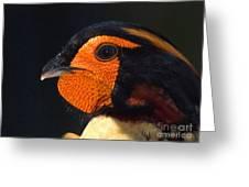 Cabots Tragopan Pheasant Greeting Card