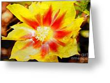 Cactus Flower Wc Greeting Card