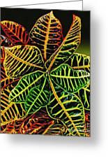 Cadiaeum Crotons Tropical Houseplant Shrub Greeting Card