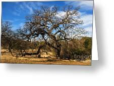 California White Oak Greeting Card