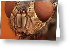 Calliphora Vicina 61 Greeting Card