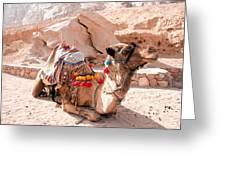 Sitting Camel Greeting Card