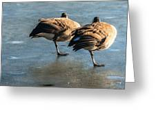 Canada Geese At Rest Greeting Card