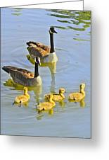 Canadian Goose Family Greeting Card