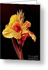 Canna Lilly In New Orleans Greeting Card