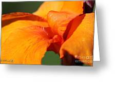 Canna Lily Named Wyoming Greeting Card